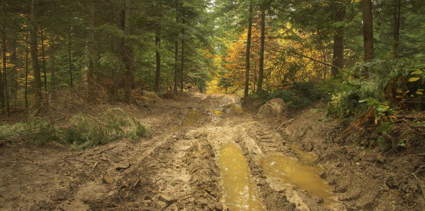 Mudswamps of Hella