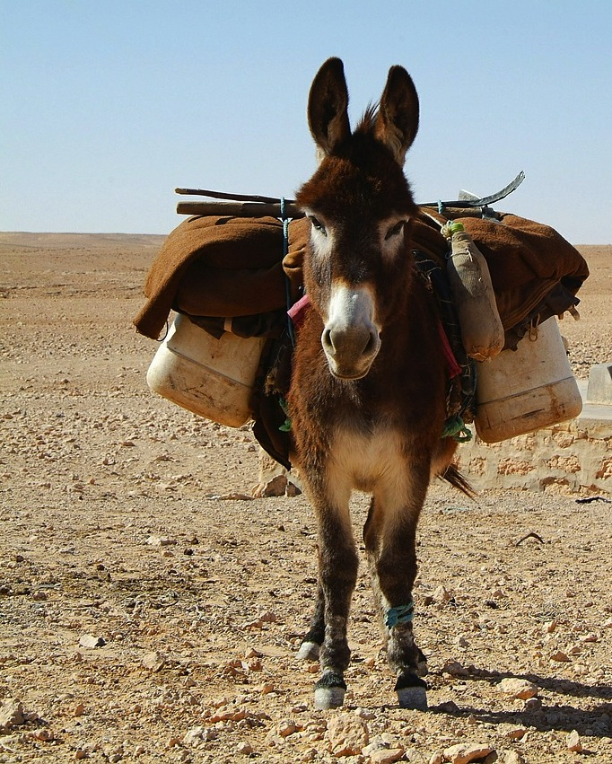 The Talking Donkey - The Meaningful Life Center
