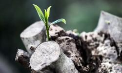 grow-781769_1920