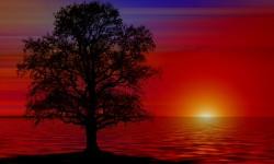 tree-835455