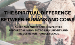 the spiritual difference between humans and cows