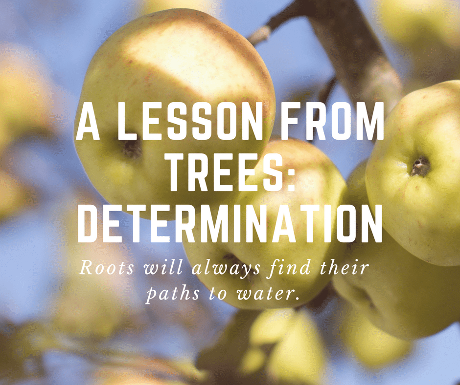 a lesson from trees: determination